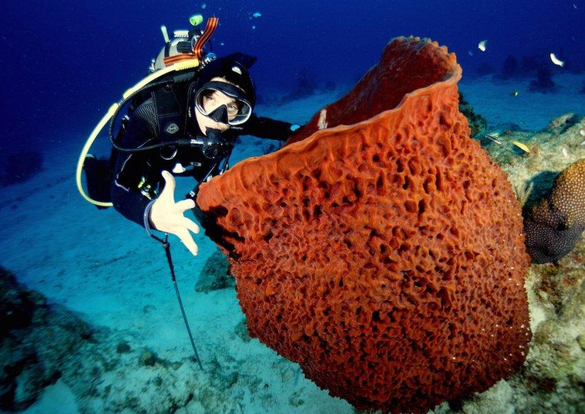 Дайвинг на багамах и кормление акул на майских праздниках