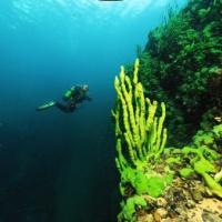 Дайвинг-тур дайв-центра RuDIVE на озеро Байкал. Подводный мир Байкала