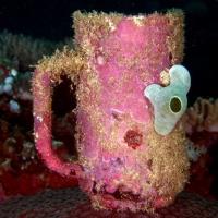 Дайвинг на Филиппинах с RuDIVE. Рост кораллов