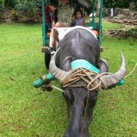 Экскурсии на Филиппинах с RuDIVE