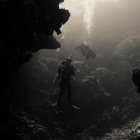 Красное море, Фери Шоалс. Автор фото Анна Петрова. Фотобанк RuDIVE
