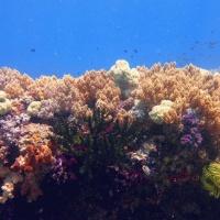 Коралловый риф. Дайвинг-путешествие RuDIVE на Раджа Ампат. Автор фото Илья Труханов