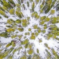 """Дайв-центр """"Полярный круг"""". Экскурсия на природу Белого моря. Автор фото Илья Труханов. RuDIVE"""