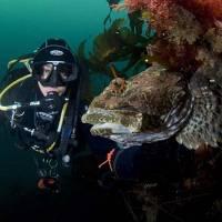 Дайвинг на Баренцевом море. Зубатка. Автор фото Наталья Червякова