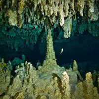 Пещерный дайвинг в Мексике. Сеноты Мексики. Фотобанк RuDIVE