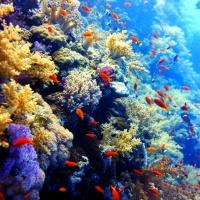 Дайвинг в Египте, Красное море, дайв-клуб RuDIVE. Коралловые рифы. Автор фото Илья Труханов