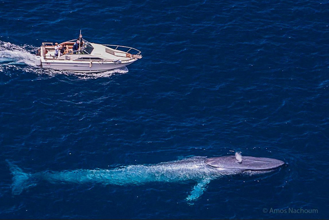 a description of a tour of the deep blue sea in search of blue whales Issn 1800-0746 exploring the seas off kalpitiya in search of whales deep blue  call now +94 112 381 migration of blue whales between the arabian sea and.