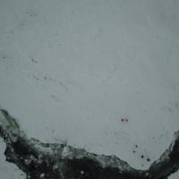 Льдина, белёк, путешественники: вид из вертолета. Экспедиция RuDIVE «Бельки Белого моря - 2019»